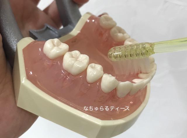 かかと磨き 歯医者 長崎